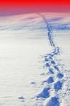 voetstappen_sneeuw_01