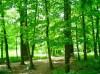 bomen_03